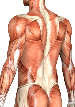 Muscles Pain muscles, Chronic Muscle Pain, Muscle Pain Treatment ...